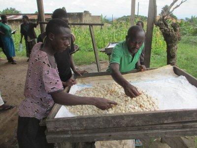 画像1: 1kg 直輸入!ウガンダ・カカオ生豆